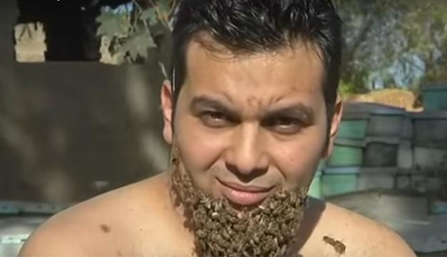 barba-abejas