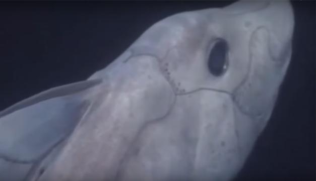 fantasma-tiburon