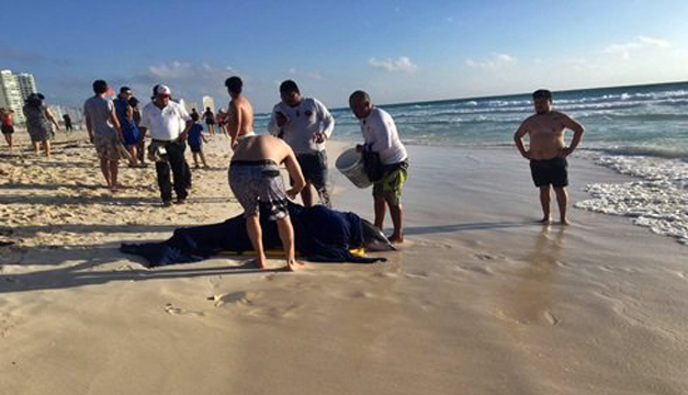 rescate-delfin