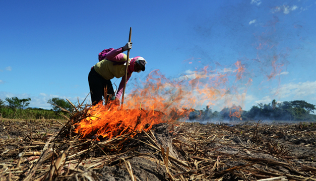 Organización del azúcar se reúne en El Salvador para debatir su modernización