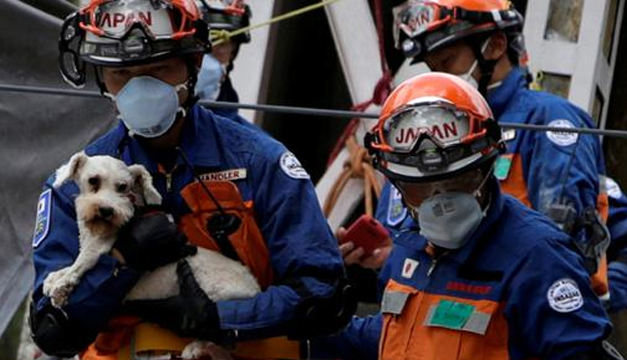 Un perrito sobrevivió 5 días bajo los escombros — Terremoto en México