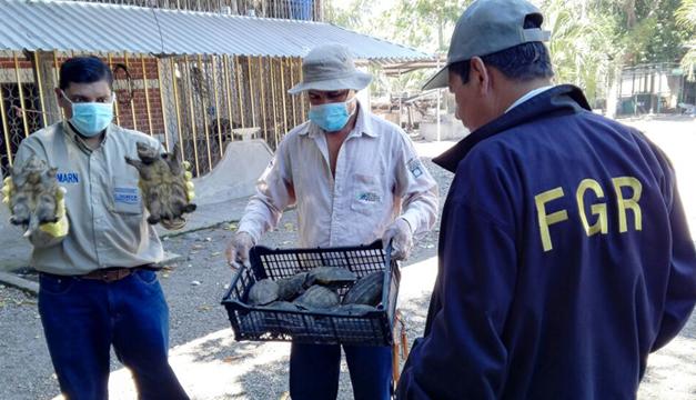 Fiscalía decomisa más de 2000 tortugas en La Paz