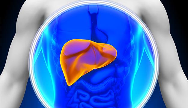 Descubren cómo la enfermedad del hígado graso se desarrolla en personas delgadas