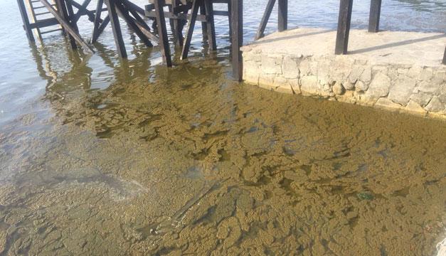 Ministra Pohl dice algas de Coatepeque tendrían