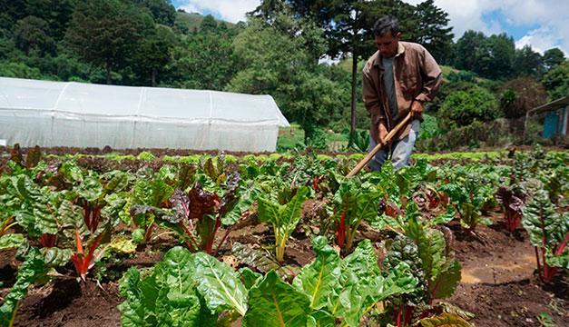 Súper Selectos beneficia a 2,000 productores locales y pequeños agricultores nacionales