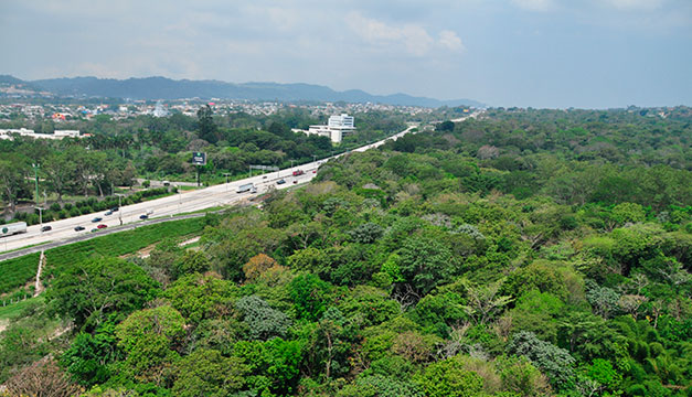 280 árboles del Bosque Los Pericos en la Avenida Jerusalén serán talados por construcción de rampas