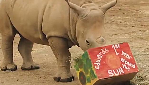 """""""Edward"""" celebró cumpleaños con pasto y cajas sorpresa en zoo de San Diego"""