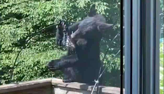 Oso sorprende a familia y les roba comida a los pájaros en Pensilvania