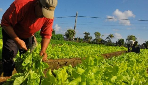 """Banco Mundial llama a """"repensar"""" sector agropecuario de América Latina"""