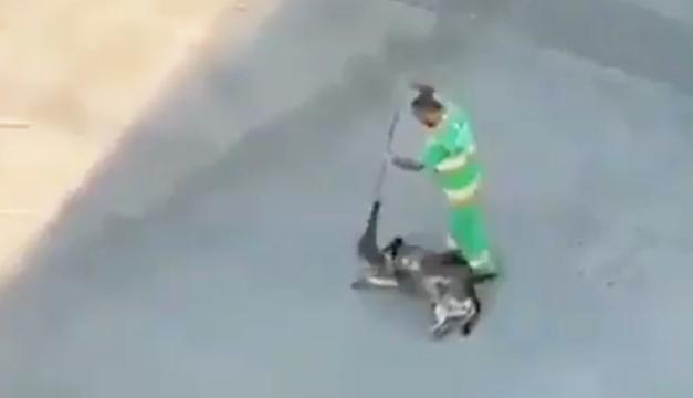 Video: El tierno gesto de un barrendero con un perro callejero que se hizo viral