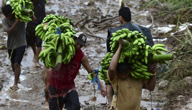 Alertan de incremento en plagas y enfermedades en sector agropecuario por paso de huracanes