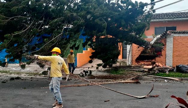 Vientos generados por Eta causan caída de árboles y postes en El Salvador