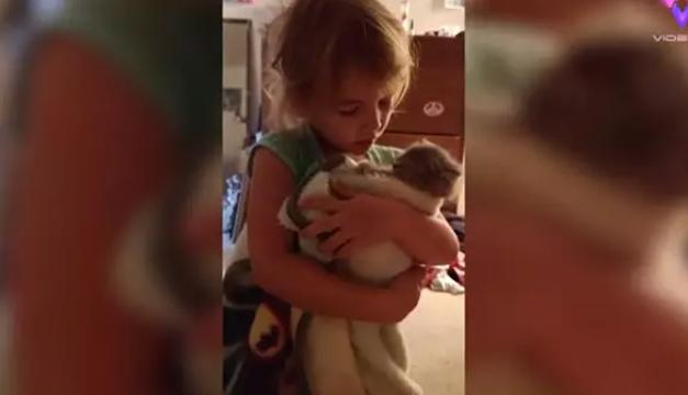 Niña de cuatro años cuida a sus gatos como si fuesen recién nacidos