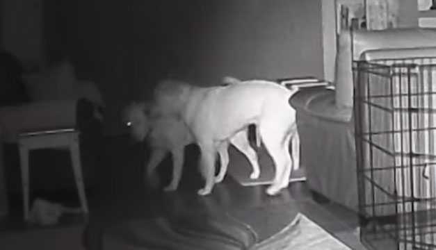 Familia graba a su perro en pleno acto escapista